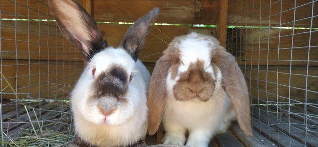 Кролики малыши взрослые мясо шкурка