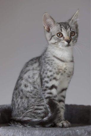 Ok 4 miesięczny kocurek Whiskas do adopcji sam lub z rodzeństwem
