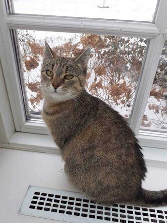 """Wirka - """"gadająca"""" kotka do adopcji"""