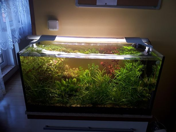 Zestaw roślin akwariowych