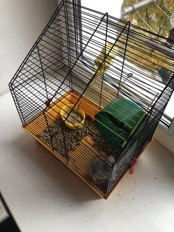 Клетка с крысой