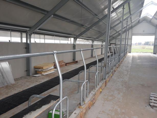Stanowiska dla krów , bydła , opasów