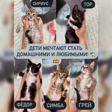 Красивые котята в добрые руки! Бесплатно!