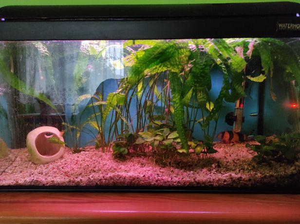 Akwarium 60L pokrywa rybki rośliny filtr grzałka