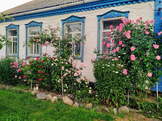 Продам дом в селе Черняховка, Киевская область