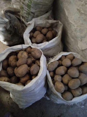Продам картоплю.