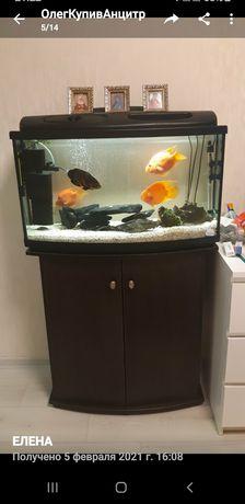 Аквариум 120 литров со всем оборудованием и 3-мя большими рыбамм