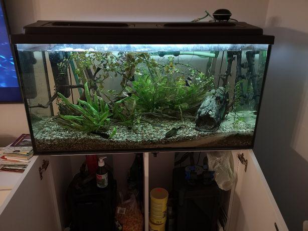 Akwarium 240 l z pełnym wyposażeniem i rybkami