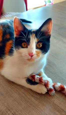 Piękne koteczki Celinka i Beza do adopcji.