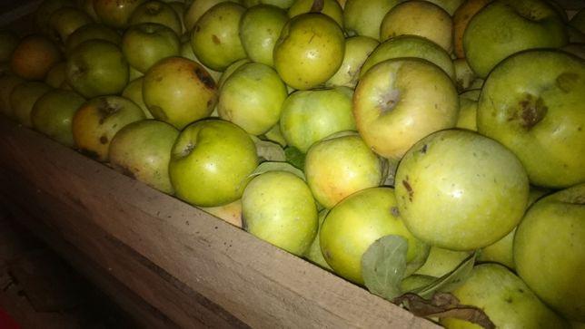 Яблоко Зеленое домашнее сладкое спелое