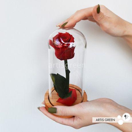 Красная живая роза в круглой стеклянной колбе. Свежесть от 3-х лет!