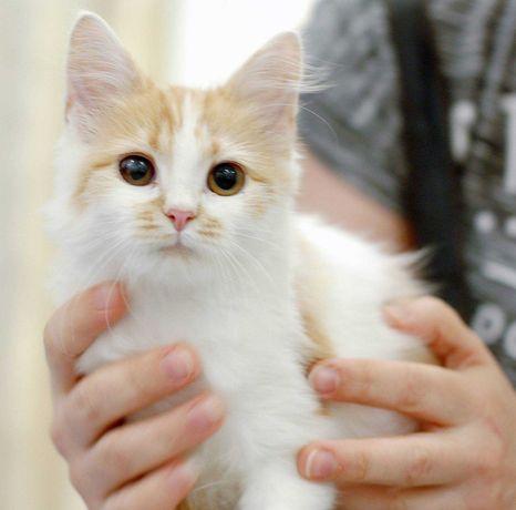 Кошечка Киса (3-4 месяца) ищет добрые и любящие ручки!
