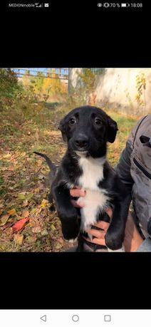 Девочка щенок в поисках семьи