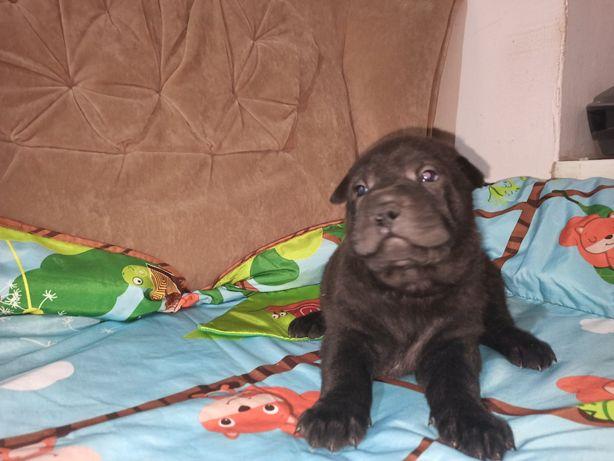 Девочка чёрная 1,5 месяца