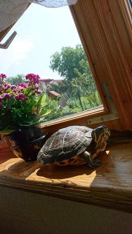 Akwarium dla żółwia, akwaria dla żółwi
