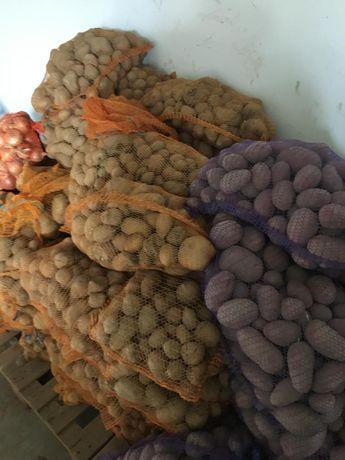 Ziemniaki, buraki, marchewka paszowa workowana lub luzem