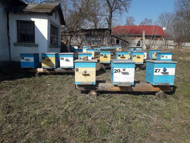 Бджоли,сімї.відводки.