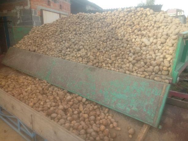 Ziemniaki mlode vineta swiezo kopane Transport dostawa