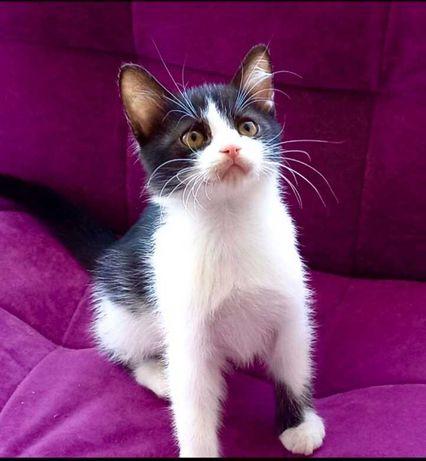 Котенок, мальчик, 2 месяца, добрый