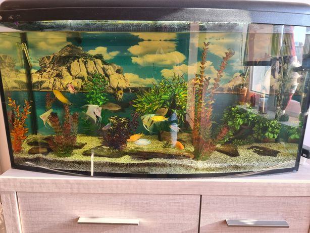 Sprzedam akwarium 240L Filtr Tetra EX800, Panoramiczne