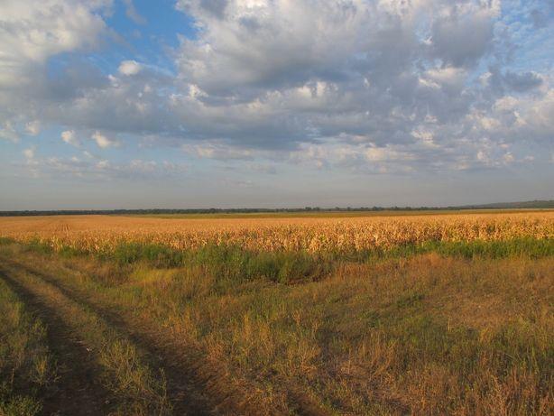 Продается усадьба в с. Хащевое