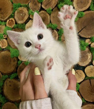 Кошеня в добрі руки