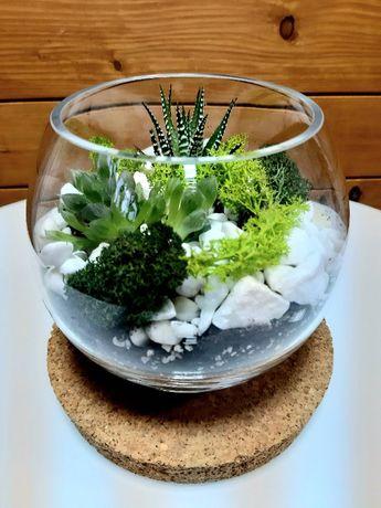 Las w szkle w słoiku naczyniu kompozycja roślinna terrarium kula szkło