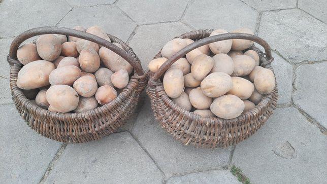 Ziemniaki jadalne sadzeniaki