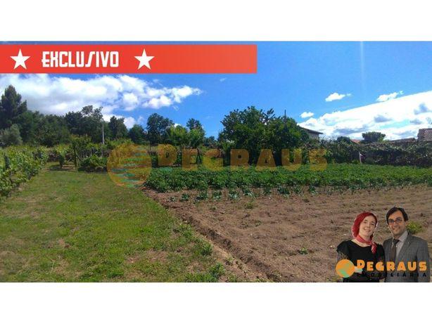 Terreno com Vinha, Arvores de Frutos, Poço e Três Ruinas