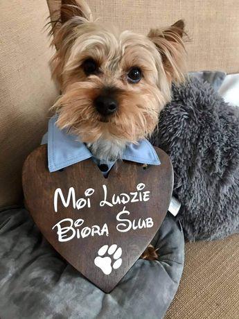 Tabliczka moi ludzie biorą ślub, serce dla psa/kota na ślub.15kolorów