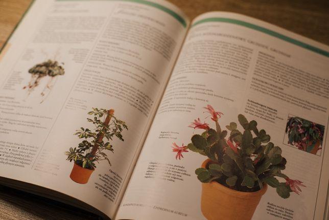 """Książka """"Kwiaty w domu - Jak dobierać i pielęgnować rośliny doniczkowe"""