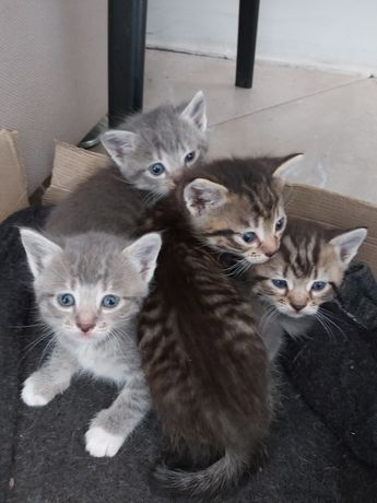 Котики в добрі руки