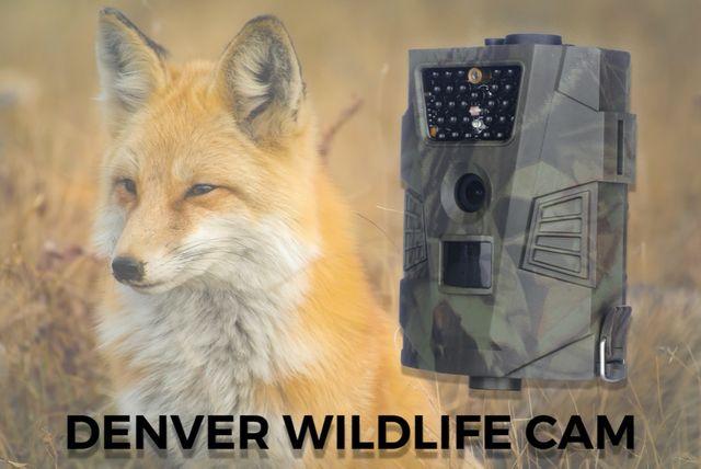 Fotopułapka Denver WCT-5001 FullHD Kamera 30xIR czujnik ruchu IP65