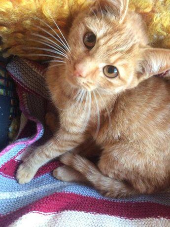 Котик в добрые руки, рыжий-рыжий...