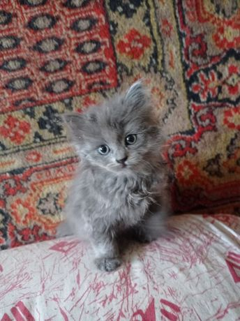 Кошка котенок в добрые руки
