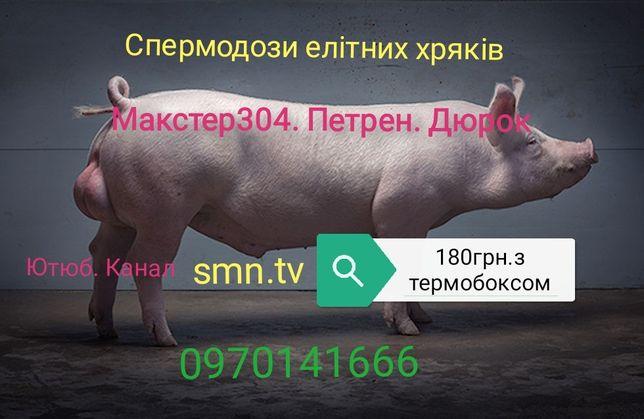 Продам семя хряков (сперма, спермодози) Дюрок, Макстер 304, Петрен