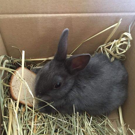 Królik króliczek