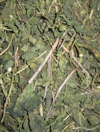 Трава крапивы для шиншилл, дегу и др грызунов