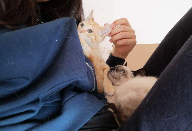 Gato bebé para Adoção Responsável