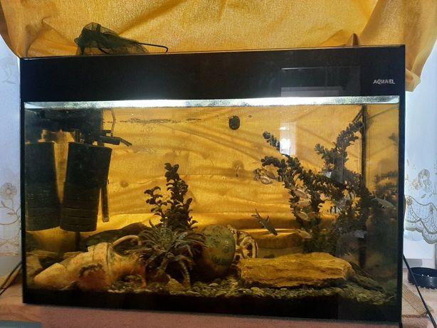 Akwarium 150l całość razem z rybami