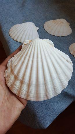 conchas do mar da Grécia