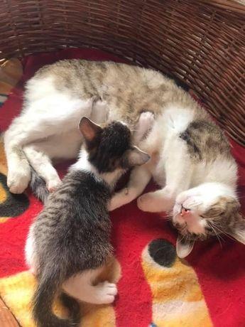 Małe piękne kotki