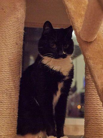 Кошка-ласкутик для любящей семьи