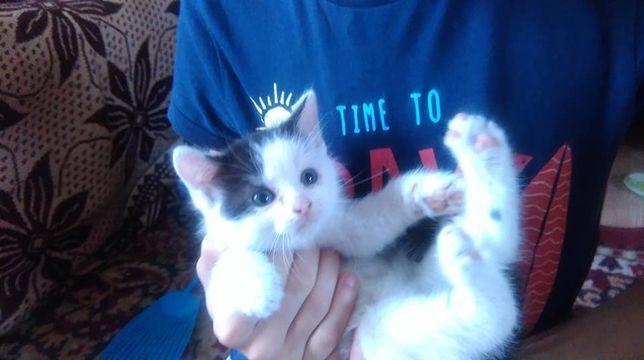 Oddam male kotki