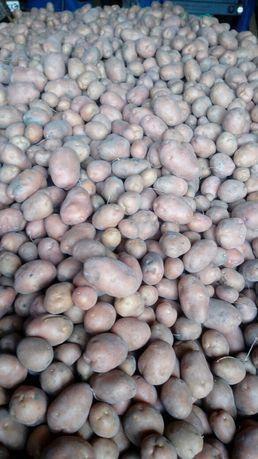 ziemniaki bellaroza
