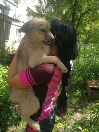 Очень крупный щенок 3мес. в хорошие руки