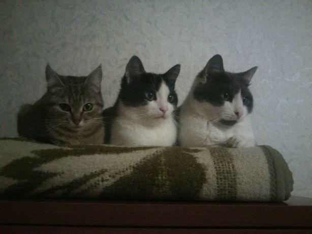 Котики Ищут Семьи