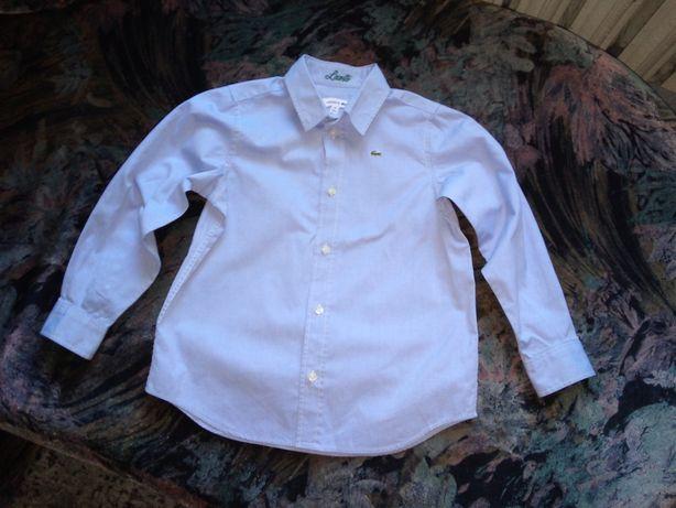Koszula Lacoste 116 dziecięca