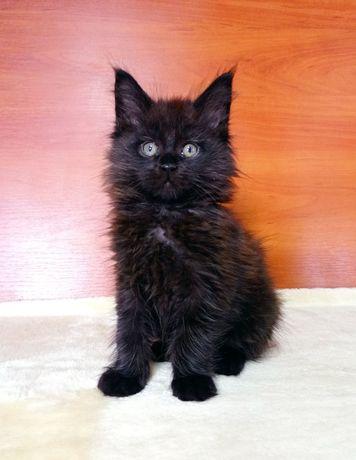 Резервирование котят Мейн Кун.