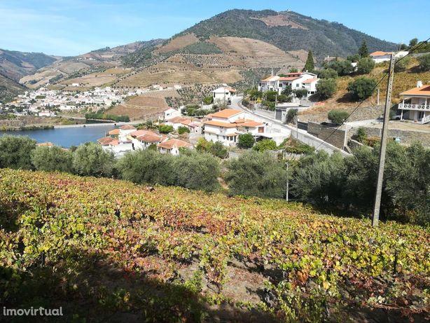 Terreno para investimento no Douro